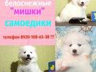 Фото в Собаки и щенки Продажа собак, щенков Продам красивенных щеночков в типе мишка, в Иваново 0