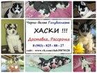 Фотки и картинки Сибирский хаски смотреть в Иваново