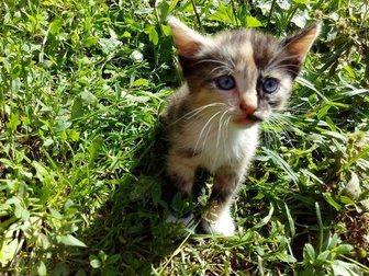 Скачать бесплатно фотографию Отдам даром СРОЧНО СРОЧНО Отдам котят! 3 девочки по 3,5 месяца! Очень срочно! 33822061 в Иваново