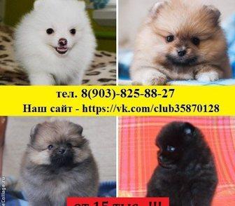 Изображение в Собаки и щенки Продажа собак, щенков Продам недорого чистокровных и не чистокровных в Иваново 15000