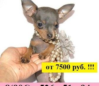 Фотография в Собаки и щенки Продажа собак, щенков Продам по минимальным ценам чистокровных в Иваново 7500
