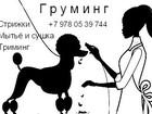 Уникальное фотографию Услуги для животных Стрижка собак и кошек 37914572 в Ялта