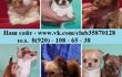 Чихуа-хуа прекрасных щеночков продам по минимальным