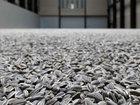 Фото в   Завод по переработке семечек подсолнечника в Энгельсе 1