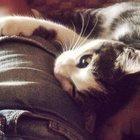потерялся кот помогите найти за вознаграждение