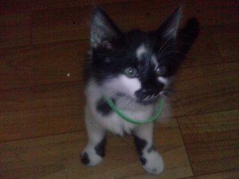 Новое фото  в хорошые руки котёнка 33311772 в Калининграде