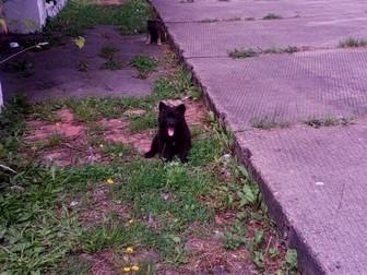 Фотки и картинки  смотреть в Калининграде