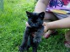 Фотография в   Отдам котенка даром. Девочка, возраст 4 месяца, в Калуге 0