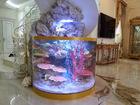 Свежее foto  Обслуживание пресноводных и морских аквариумов 39039408 в Калуге