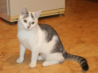 Скачать бесплатно фотографию Отдам даром - приму в дар Симпатичный юный котик Болтик, в добрые руки 66515076 в Калуге