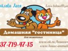 Изображение в Домашние животные Услуги для животных Теперь у нас накопительная система скидок! в Камышине 150