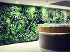 Уникальное фото Кухонная мебель Озеленение интерьера искусственными растениями, Фитостена, Вертикальное озеленениею Живая стена, Зеленая стена, Фитодизайн 32376091 в Казани