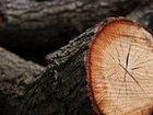 Уникальное фото Дизайн интерьера валка деревьев спил деревьев колотые дрова 32748870 в Казани