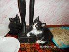 Фото в Кошки и котята Продажа кошек и котят отдам в заботливые руки черную девочку и в Казани 0