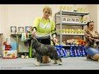 Фото в Собаки и щенки Вязка собак Титулованный сногсшибательный цвергшнауцер в Казани 0