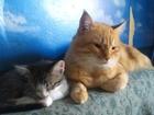 Смотреть фотографию  даром котят 37048569 в Казани