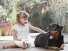 Уникальное фотографию  Дрессировка собак в Нижнекамске 39124762 в Нижнекамске