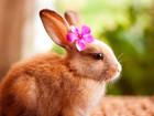 Скачать бесплатно фотографию Отдам даром - приму в дар Примем в дар животных для семейной фермы 51294721 в Казани