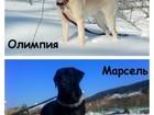 Фото в Новокузнецке