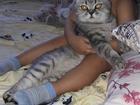 Изображение в   Нужен кот для вязки. в Кемерово 0