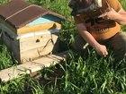 Скачать бесплатно фотографию  Продам Отличный мед тел, 8 950 273 7961 Кемерово 39598927 в Кемерово
