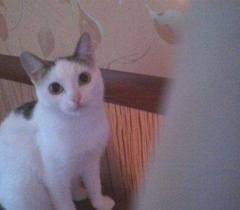 Фотография в Отдам даром - Приму в дар Отдам даром Няшка - миниатюрная, молоденькая кошечка, в Кемерово 0