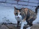 Фото в   Эта трехцветная красавица оказалась на улице в Комсомольске-на-Амуре 10