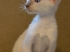 Фото в Кошки и котята Продажа кошек и котят Питомник ориентальных и сиамских кошек «Verossa» в Комсомольске-на-Амуре 0