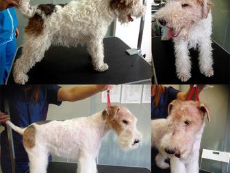 Просмотреть фотографию Услуги для животных Профессиональный грумер, Стрижка собак,тримминг 12837013 в Москве