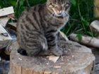 Скачать бесплатно фотографию  пропал кот 33946133 в Королеве