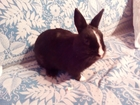 Смотреть фотографию  Кролики 36630409 в Костроме