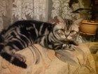 Фото в   Готовы к переезду супер котятки -от породистых в Буе 2000