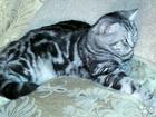 Скачать бесплатно foto  Кот мраморный вязка 39462412 в Костроме
