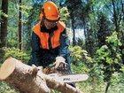 Скачать изображение Резюме Предложение: Спил Деревьев! в Краснодаре 32558437 в Краснодаре