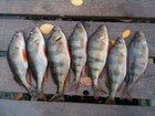 Фото в   Доброго времени суток всем рыболовам и посетителям в Краснодаре 0