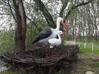 Новое изображение  Рыбалка на окуня в Динском районе и отдых 35146854 в Краснодаре