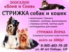 Фотография в Домашние животные Услуги для животных Зоосалон Боня и Соня приглашает собак и в Краснодаре 0