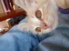 Изображение в   Срочно отдам котенка (девочку) в связи с в Краснодаре 0