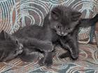 Скачать бесплатно фотографию Приму в дар котята 36350790 в Краснодаре