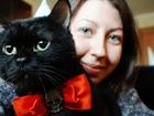 Фотография в Кошки и котята Вязка Здоровый и хитрый кот ищет девушку для приятного в Краснодаре 500