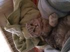 Изображение в   Девочке 2, 5 года. Кота в глаза не видела. в Краснодаре 0