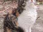 Скачать бесплатно фото Отдам даром - приму в дар котята 39237675 в Краснодаре
