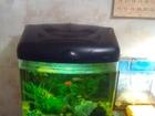 Новое foto Аквариумы Качественный аквариум 50 л со всем содержимым 40757188 в Краснодаре