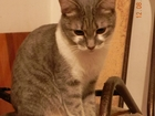 Увидеть фото Отдам даром - приму в дар Отдам кошку мурлыку в хорошие руки 52871660 в Краснодаре