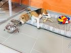 Увидеть фото Услуги для животных Зоогостиница, передержка, груминг 68859720 в Краснодаре