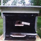 Продажа пчелосемей породы карпатка