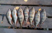 Рыбалка на окуня в Краснодаре и отдых