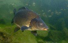 Рыбалка на сазана в Краснодарском крае и отдых