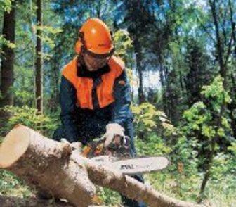 Фотография в Резюме и Вакансии Резюме Спил Деревьев! ! ! ! в Краснодаре! ! ! ! в Краснодаре 0