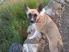 Увидеть изображение Продажа собак, щенков Отдам чудесную девочку! 33131100 в Красноярске